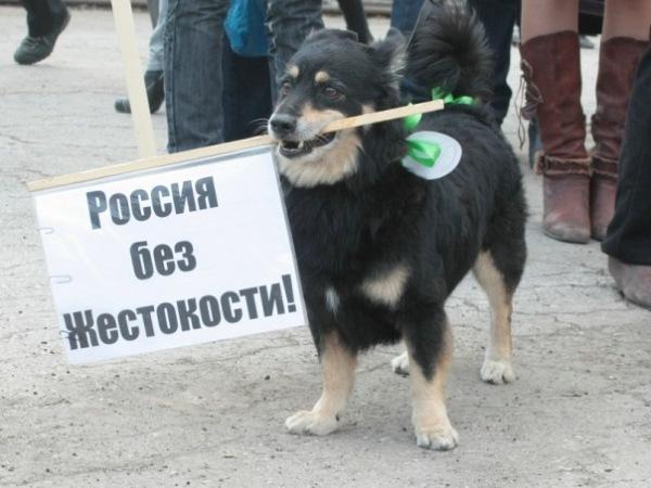 О собаках дума калининград